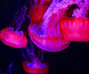 jellyfish, pink, and grunge image