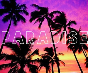paradise, summer, and palms image