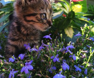 adorable, kitty, and nature image