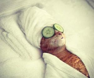 cat, funny, and spa image