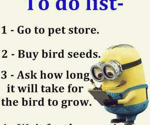 minions, bird, and funny image
