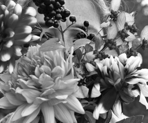 autumn, black and white, and flowers image