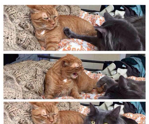 cat, funny, and girlfriend image
