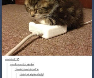 cat, heart, and tumblr image
