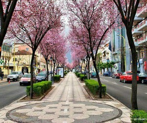 pink, flowers, and albania image