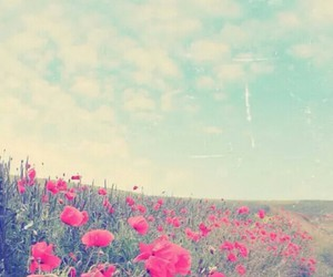 flowers, wallpaper, and sky image