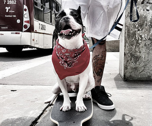 dog, french bulldog, and pet image