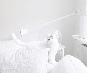 aesthetic, cat, and white image