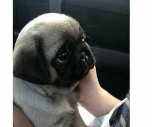dog, eyes, and pug image