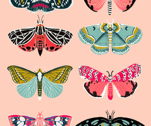 butterfly, animal, and pink image