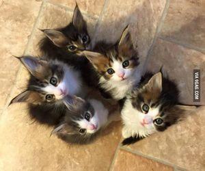 kitten, cat, and animal image