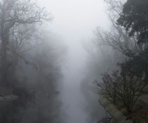 fog, pale, and nature image