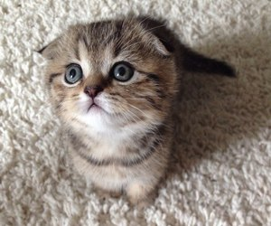 cat, kitty, and funny gif image