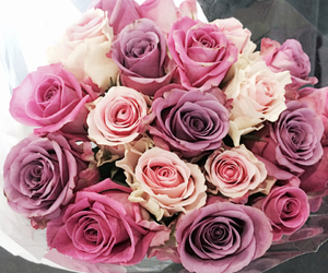 rose, beautiful, and colours image