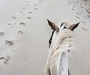 beach, horse, and insporation image