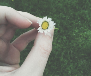 beautiful, vintage, and daisy image