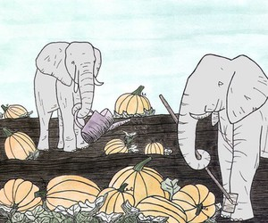 elephant, gardening, and pumpkin patch image