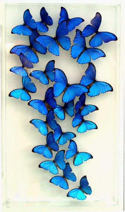 Wallpapers Blue Butterflies Hipster Discovered By Lalap