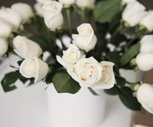 beautiful, roses, and white roses image