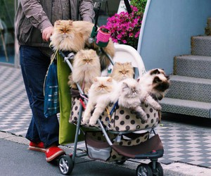 cat lady, cats, and crazy image