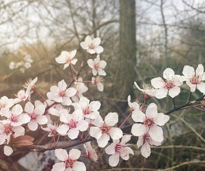 art, floral, and nature image