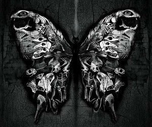 butterfly, art, and dark image
