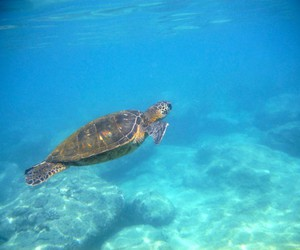 beach, sea turtles, and water image