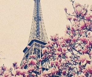 paris, flowers, and city image