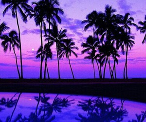 purple, summer, and beach image