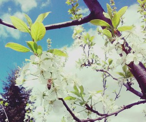 bee, photo, and spring image