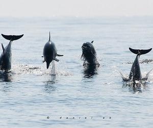 dolphin, sea, and beautiful image