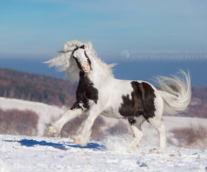 equestrian, horse, and pony image