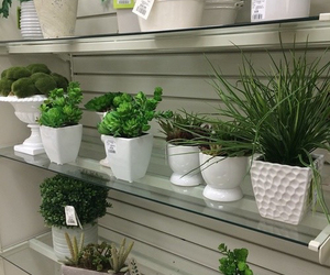 plants, green, and indie image