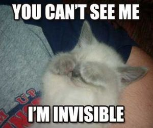 cat, invisible, and cute image