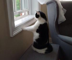 animals and cat image