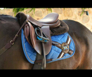 beautiful, equipment, and horse image