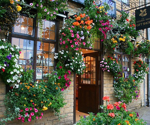 flowers, shop, and nature image