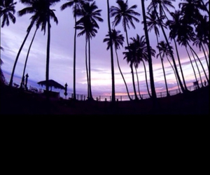 nature, palm trees, and summer image