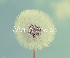believe, flower, and wish image