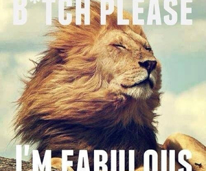fabulous, funny, and lion image