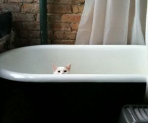 bath, style, and cat image