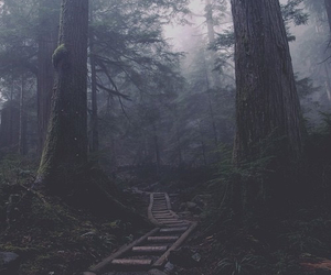 forest, dark, and nature image