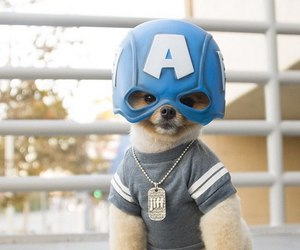 captain america, puppy, and animal image