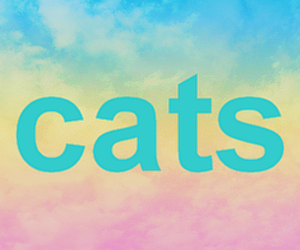 cats, hgf, and omg yes image