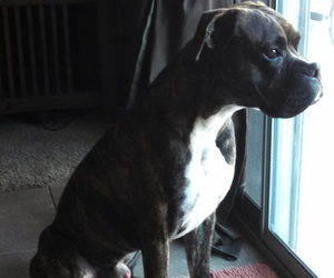 baby boy, boxer, and cutie image