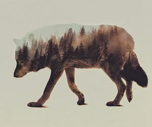 animals, awesome, and hipster image