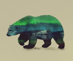 art, animal, and bear image