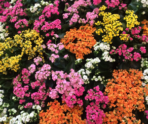 Fleurs, flowers, and orange image