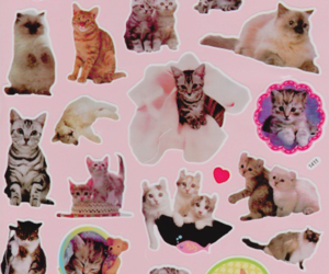 cat, kitty, and pink image