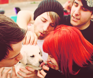 paramore, dog, and hayley williams image